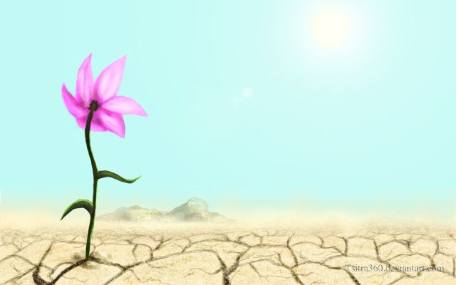source of Image: http://img15.deviantart.net/5107/i/2010/245/3/f/flower_in_a_desert_by_tsitra360-d2xw8mg.jpg